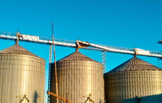 Bandas transportadoras de granos